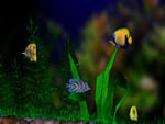 3D Bungalow Aquarium Screensaver